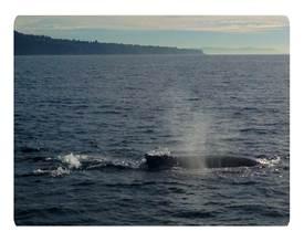 EEK_whale