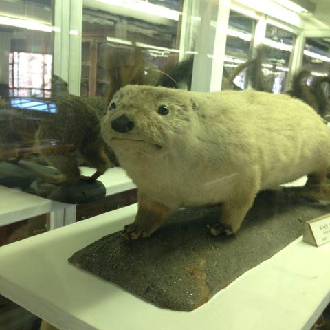 Stuffed Otter