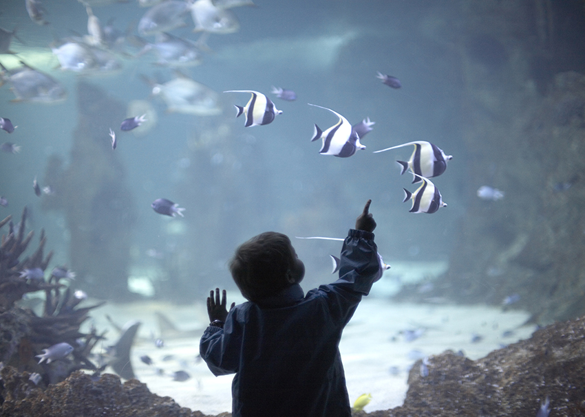 10 Swimmingly Good Reads for Kids Who Love Sea Life