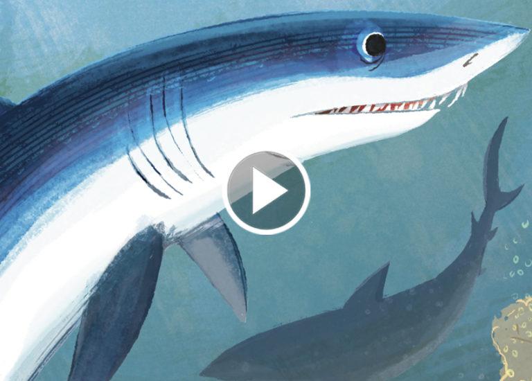 brightly-storytime-sharks