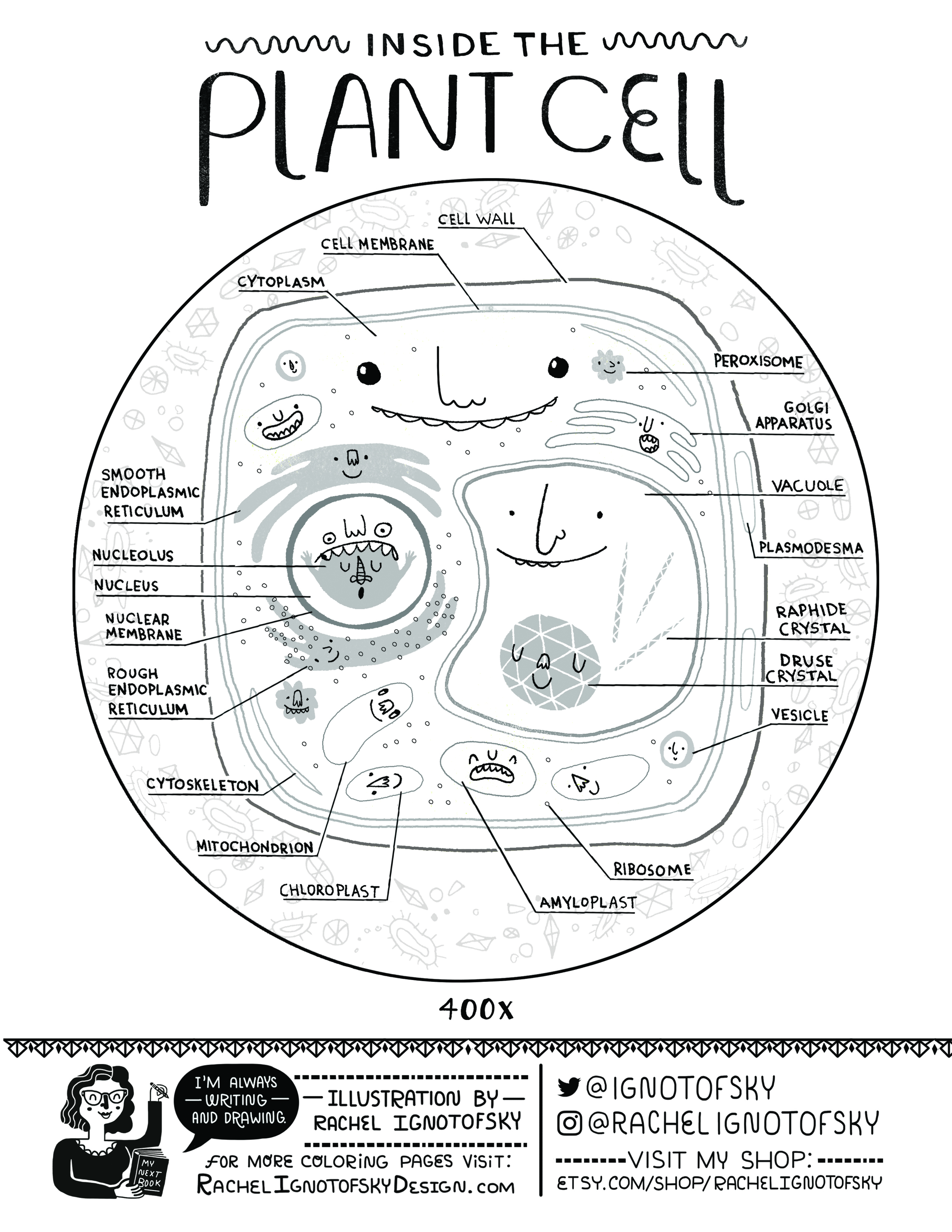 Inside the Plant Cell