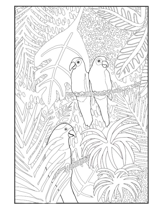 bird coloring sheet