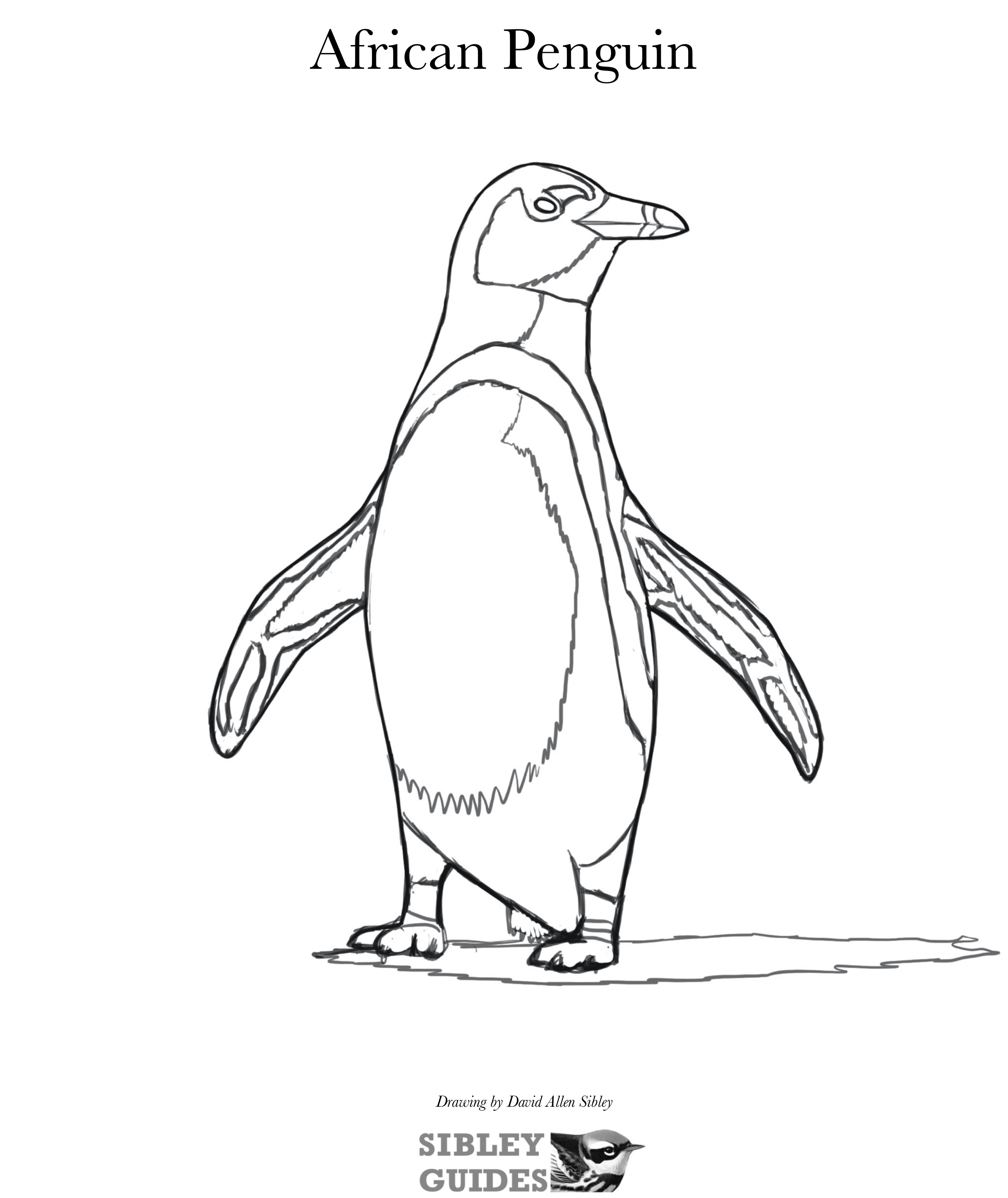 david sibley penguin